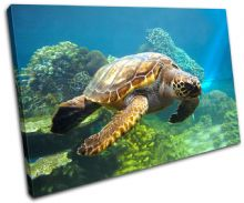 Sea Turtle Animals - 13-1819(00B)-SG32-LO